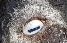 Quiz: Đây là mắt của con gì? Câu trả lời có thể khiến bạn... hết cả hồn đấy