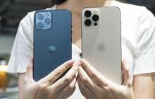 iPhone 13 mới quá đắt đỏ, nhanh trí tậu ngay iPhone 12 đang giảm giá cực sâu