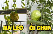 """Khoe vườn cây trái """"trĩu quả"""" trồng được trên chung cư, cô gái khiến dân mạng cười """"sang chấn tâm lý"""" vì một lý do"""