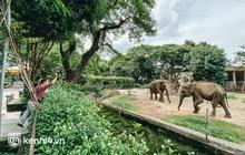Thảo Cầm Viên Sài Gòn kêu cứu, xin hỗ trợ hơn 30 tỷ đồng để chăm sóc bầy thú