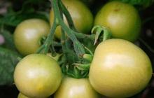 4 loại rau quả quen thuộc trong cuộc sống hóa ra lại có hại cho sức khỏe, tốt nhất đừng ăn