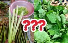 Không phải người Việt nào cũng biết những loại rau mọc dại dưới đây, dân thành thị giờ muốn tìm mua cũng khó
