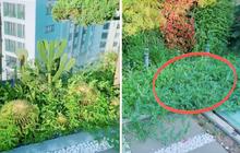 Về quê tránh dịch 1,5 tháng, gia chủ tá hoả khi quay lại thấy vườn penthouse mọc đầy dưa hấu, nghe lý do mới thấy cực nể