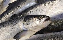 """5 loại cá này chính là """"ổ chứa"""" formaldehyde và kim loại nặng, dù giá rẻ bạn cũng không nên mua về ăn"""