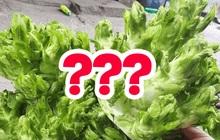 """Tiếp tục là """"cẩm nang phổ cập rau xanh"""" cho người Việt, dân thành thị chưa chắc biết hết những loại này"""