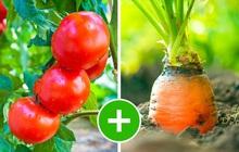 """8 bộ đôi rau củ là """"trời sinh 1 cặp"""", trồng cạnh nhau không những xanh tốt mà còn giảm sâu bệnh"""