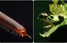 """8 loài vật có vẻ ngoài """"lừa đảo"""" nhất: Trông nguy hiểm mà hiền khô, bất ngờ nhất là loài cuối cùng"""
