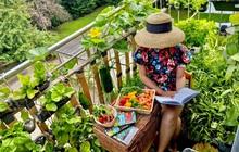 Vườn rau đẹp ngất ngây trên ban công 2.5m2 ở Hà Nội, gia chủ tự tay trồng đủ loại rau củ nhờ kinh nghiệm học trên mạng
