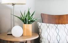 Nhiều người mách nhau dùng 6 loại cây này để thanh lọc phòng ngủ: không gian vừa thoáng vừa giảm hẳn độc tố