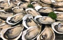 Quảng Ninh: Người đàn ông tử vong do ăn hàu sống