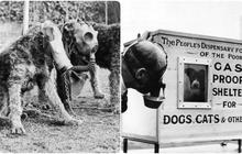 """400.000 vật nuôi bị chính chủ """"thảm sát nhân đạo"""": Một chương lịch sử tăm tối mà người Anh không bao giờ muốn nhớ lại"""