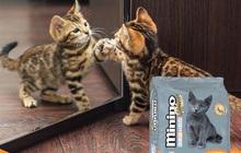 Nuôi mèo - nuôi dưỡng bởi yêu thương!