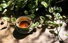 """Chia sẻ khoảnh khắc nâng niu thiên nhiên bên ly cà phê, """"bật chế độ u mê"""" với muôn góc sống xanh của giới trẻ"""
