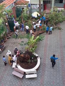 Chùm ảnh: Hiện trường cây phượng bật gốc đè trúng 13 học sinh khiến 1 em tử vong thương tâm