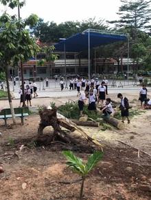 Bình Dương: Cây phượng trong sân trường bật gốc, ngã đổ ngay sau khi học sinh ra về