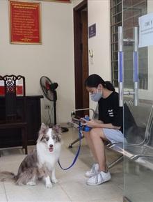 """Dắt chó đi dạo, cô gái trẻ bị phạt 2 triệu đồng trong ngày đầu Hà Nội giãn cách: """"Tôi cho chó ra ngoài đi vệ sinh... chỉ ra ngoài 2 phút thôi"""""""