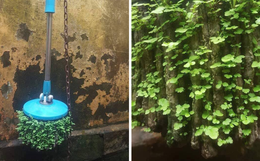Thêm một ca ở bẩn khiến dân mạng câm nín: Cây lau nhà 3 năm không dùng mọc hẳn cả rừng cây xanh mướt