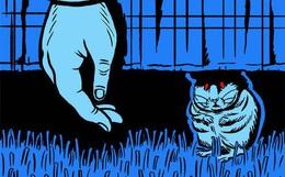 Mèo nhà gặm xác người: Tưởng là chuyện kinh dị nhưng có thật và khoa học mới tiết lộ quá trình này diễn ra như thế nào