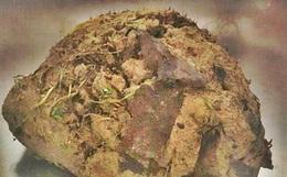 Thấy chó nhà liên tục sủa vào tảng đất sét, người dân nghi ngờ lại gần xem không ngờ cứu được một sinh mạng