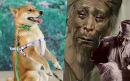 """NSX """"Cậu Vàng"""" lên tiếng giữa tâm bão tranh luận về chú chó Nhật: """"Chó ta thiên tính tự nhiên cao, không đáp ứng được kĩ thuật!"""""""
