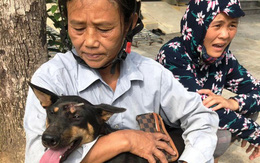Vụ triệt phá băng nhóm trộm hơn 100 tấn chó: ACPA hỗ trợ chăm sóc chó bị thương
