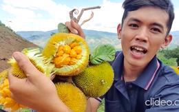 Việt Nam có loại quả mọc dại bán với giá hàng trăm nghìn 1 ký, hương vị cực độc lạ và quá trình hái không dễ tí nào