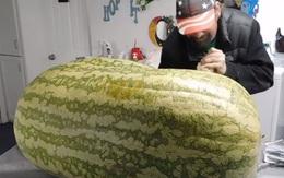 """Trồng được trái dưa hấu nặng gần 130kg, tới lúc xẻ ra ăn, người đàn ông nước ngoài mới """"chết lặng"""" vì cảnh tượng bên trong"""