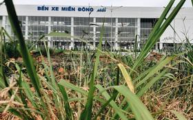 """Bến xe Miền Đông mới trị giá 4.000 tỉ đồng đã hoàn thành nhưng vẫn """"án binh bất động"""", cỏ dại phủ kín xung quanh"""
