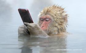 """Bức ảnh """"khỉ tuyết cầm iPhone"""" này là thật hay ghép? Nếu thật, ai là người chụp và làm thế nào hay vậy?"""