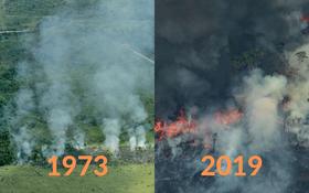 Loạt ảnh Amazon trước và sau đại nạn cháy rừng 2019: Lá phổi xanh ngày nào đã mang đầy bệnh tật do con người đầu độc