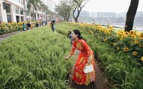 Phố nhà giàu Phú Mỹ Hưng đón Tết Canh Tý với đường hoa xuân đầy lúa và bắp ngô, tái hiện khung cảnh làng quê bình dị