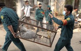 """Vụ đàn khỉ """"đại náo"""" khu dân cư Sài Gòn: Con khỉ đầu tiên đã bị bắt gọn"""