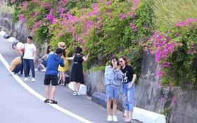 """""""Con đường hoa giấy"""" ở Đà Nẵng có gì hot mà giới trẻ rần rần kéo đến check-in?"""