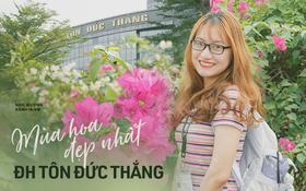 Mùa hoa giấy về phủ kín trường Đại học Tôn Đức Thắng: Nếu muốn làm nàng thơ hay chàng thơ thì đến ngay còn kịp