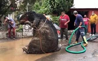 """Người phụ nữ chết đuối trong nhà vì ngập lụt, sau khi thông cống phát hiện """"con chuột"""" khổng lồ cùng hàng tấn rác thải gây tắc cứng"""