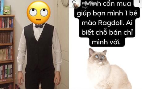 """Cô gái trong chuyện hỏi mua mèo nhưng bị thanh niên vặn vẹo lên tiếng: """"Không biết bạn đó là ai, nổi tiếng cỡ nào"""""""