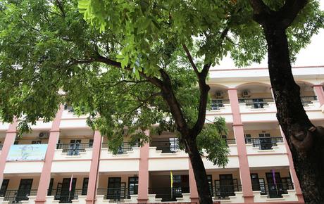 """Sau nỗi kinh hoàng """"cây đổ trong trường học"""": Các trường quản lý cây xanh ra sao?"""