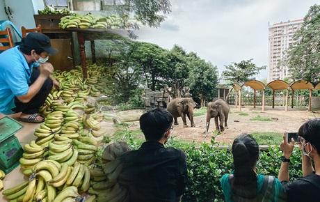Người Sài Gòn góp cả chục tấn rau củ cùng hàng tỷ đồng, cứu đói bầy thú ở Thảo Cầm Viên trong mùa dịch Covid-19