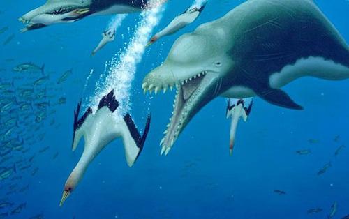 Ai bảo cá heo hiền lành dễ thương? Từng có một chủng cá heo đã gieo rắc kinh hoàng cho đại dương, đến cá mập trắng cũng phải khiếp sợ