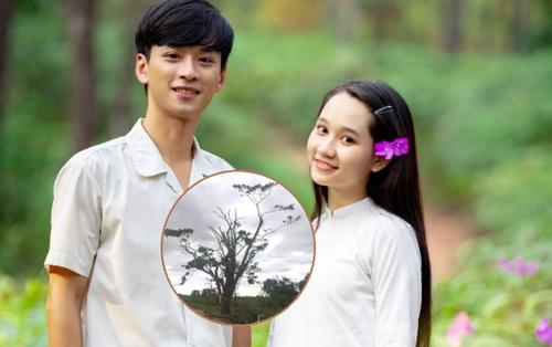 """Nhìn """"cây cô đơn"""" từng gây sốt ở Mắt Biếc bị bão số 5 quật tơi tả, netizen Việt nức nở """"thương quá Huế ơi!"""""""