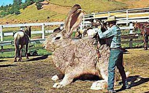 Tại sao không có con thỏ to bằng con bò? Hóa ra đáp án lại rắc rối hơn bạn tưởng rất nhiều
