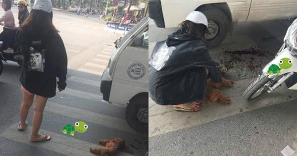Hình ảnh cô gái khóc bên chú chó Poodle bị ô tô cán chết và lời cảnh tỉnh: Không muốn đau lòng, đừng thả rông chó!