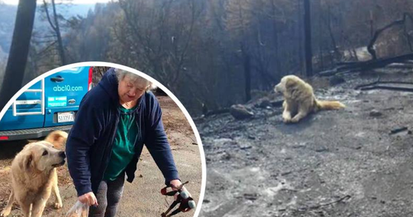 Sống sót sau vụ cháy California, chú chó vẫn quay về ngôi nhà cũ bị thiêu rụi chờ đợi chủ