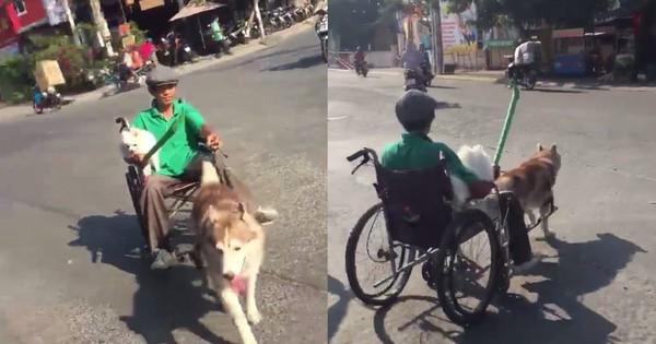 Clip chó Husky kéo xe có chủ ngồi trên chạy giữa trời nắng nóng gây tranh cãi lớn