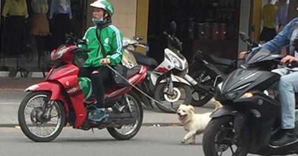 Thanh niên mặc đồng phục GrabBike tung tăng dắt chó đi dạo giữa phố đông