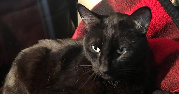 Chú mèo đi lạc 5 năm rồi bất ngờ trở về, nghe câu chuyện về chuyến hành trình ấy, ai cũng ngạc nhiên không thể tin được