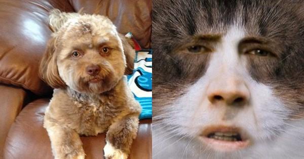 Cô gái đăng ảnh thú cưng lên mạng, cư dân mạng thích mê vì gương mặt chú chó như hoán đổi với mặt người