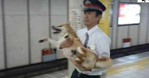 Nhật Bản: Một chú chó bị bảo vệ ga bắt sống vì định nhảy tàu đi chơi mà không mua vé