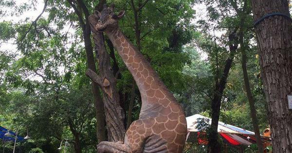 Chú hươu cao cổ leo cây ở Thảo Cầm Viên bất ngờ nổi tiếng khắp MXH bởi thần thái siêu dị
