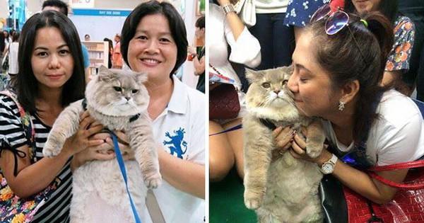 Diện kiến boss mèo lông xù nổi tiếng nhất Thái Lan, đến đâu cũng được mọi người xin bế